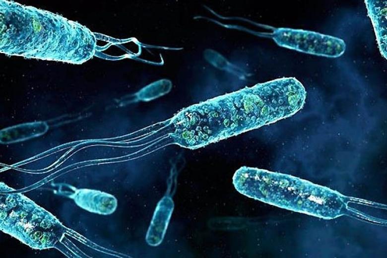 Бактерии, которые могу разрушить пластик